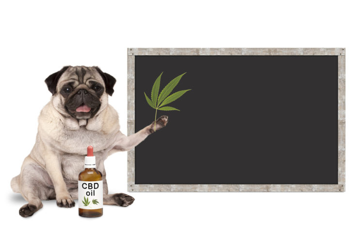How Much Cbd Can I Give My Dog
